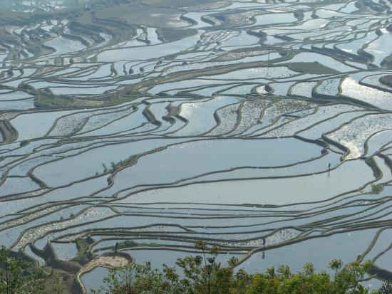 Risaie a terrazze dello Yuanyang